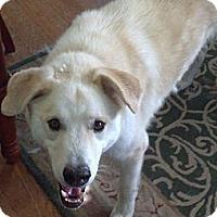 Adopt A Pet :: Maximus - Wayne, NJ