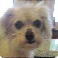Adopt A Pet :: Jimmy - Allentown, PA