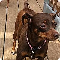 Adopt A Pet :: Barbie - Malaga, NJ