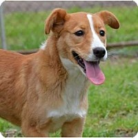 Adopt A Pet :: Abby - New Boston, NH