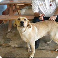 Adopt A Pet :: Meghan - Altmonte Springs, FL