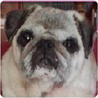 Adopt A Pet :: Edith - Beachwood, OH
