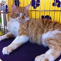 Adopt A Pet :: Magnum M - Sacramento, CA