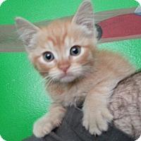 Adopt A Pet :: Tilly - Irvine, CA