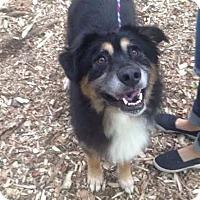 Adopt A Pet :: Hulk - Ortonville, MI