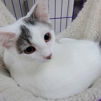 Adopt A Pet :: Tori - Seguin, TX