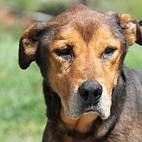 Adopt A Pet :: Max - Marietta, OH