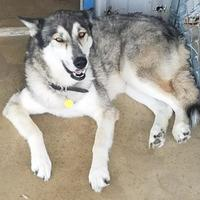 Adopt A Pet :: Luke(PAWS) - Brownwood, TX