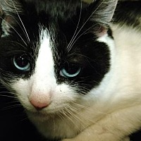 Adopt A Pet :: Eliza - Attica, NY
