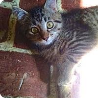 Adopt A Pet :: Cookie - Lambertville, NJ
