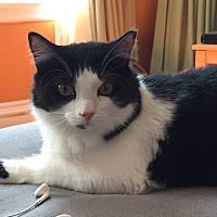 Adopt A Pet :: Lotus - Worcester, MA