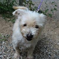 Adopt A Pet :: Tango - Muskegon, MI