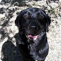 Adopt A Pet :: Duke ADOPTED!! - Antioch, IL