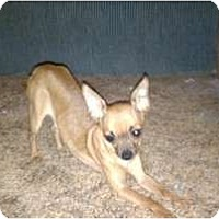 Adopt A Pet :: Howie - Coventry, RI