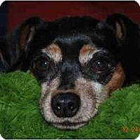 Adopt A Pet :: Maggie - Minneapolis, MN
