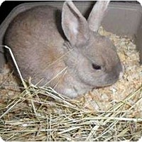 Adopt A Pet :: JoJo - Maple Shade, NJ