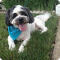 Adopt A Pet :: Bailey - Plainview, NY