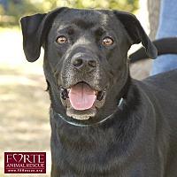 Adopt A Pet :: Jack Black - Marina del Rey, CA