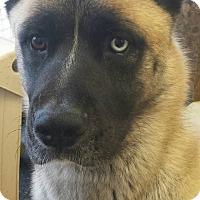 Adopt A Pet :: Beast - Virginia Beach, VA