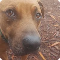 Adopt A Pet :: Sweet Shadow - Issaquah, WA