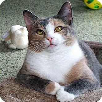 Calico Cat for adoption in Sautee, Georgia - Spooky