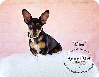 Corgi/Dachshund Mix Dog for adoption in Lubbock, Texas - Kirk