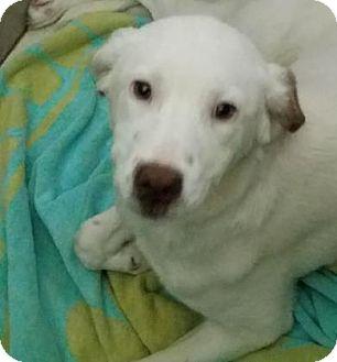 Mixed Breed (Medium) Mix Dog for adoption in Philadelphia, Pennsylvania - Alice
