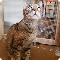 Adopt A Pet :: Gina - Scottsdale, AZ