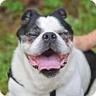 Adopt A Pet :: B. Max