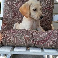 Adopt A Pet :: SUNNIE - ROCKMART, GA