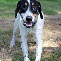 Adopt A Pet :: Colton - Waldorf, MD