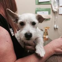 Adopt A Pet :: Princess - Columbia, SC