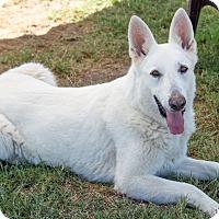 Adopt A Pet :: Jett - Patterson, CA