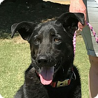 Adopt A Pet :: Mandy - Turlock, CA