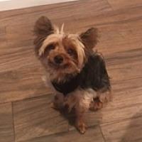 Adopt A Pet :: Bugsy - N. Babylon, NY