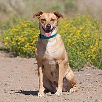 Adopt A Pet :: Arizona - Washoe Valley, NV