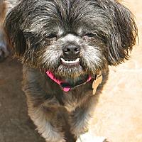 Adopt A Pet :: Abilene - Woonsocket, RI