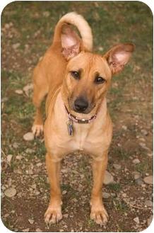 Basenji Mix Dog for adoption in Westfield, New York - Fiona