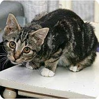 Adopt A Pet :: Mickey - Cleveland, OH