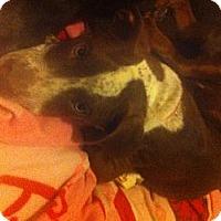 Adopt A Pet :: *BO - Winder, GA