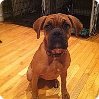 Adopt A Pet :: Sookie - ARDEN, NC