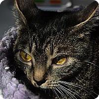 Adopt A Pet :: Valerie - Brooklyn, NY