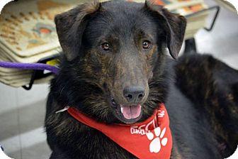 Collie Mix Dog for adoption in Blakeslee, Pennsylvania - Marshall