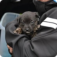 Adopt A Pet :: Lucy - ROME, NY