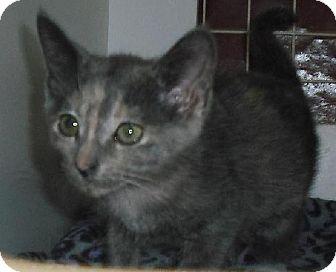 Domestic Mediumhair Kitten for adoption in Columbus, Ohio - Orphan Annie