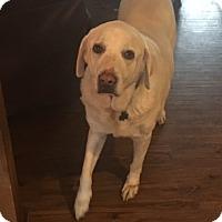 Adopt A Pet :: Gloria - Lewisville, IN