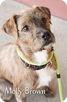 Terrier (Unknown Type, Medium) Mix Dog for adoption in DFW, Texas - Molly Brown