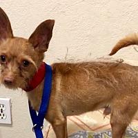 Adopt A Pet :: BP - Phoenix, AZ