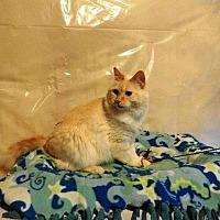Adopt A Pet :: Antarctica - Chaska, MN