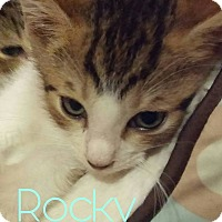Adopt A Pet :: Rocky - New Smyrna Beach, FL